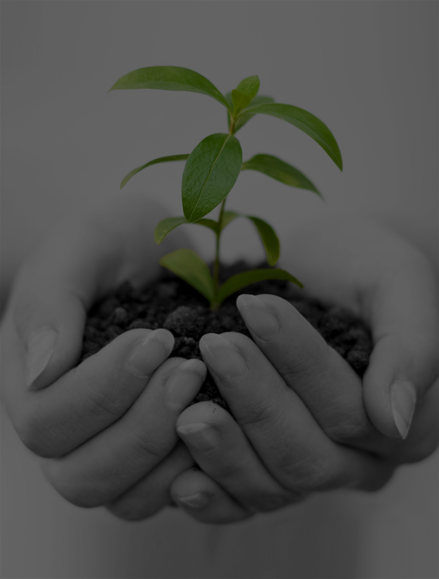 Women's hands holding a plant with soil and roots